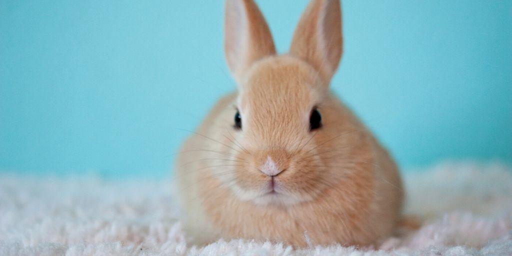 zacht, lief konijntje