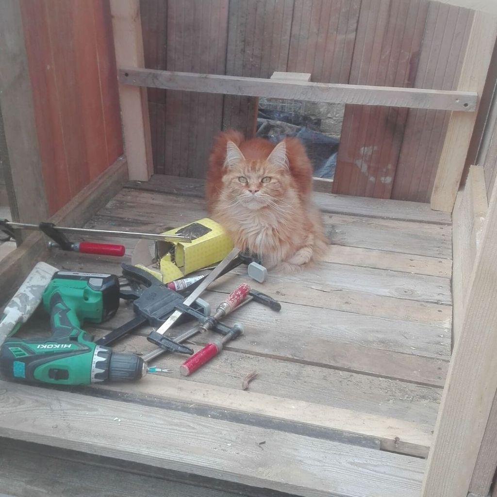 kat in kippenhok werkmateriaal