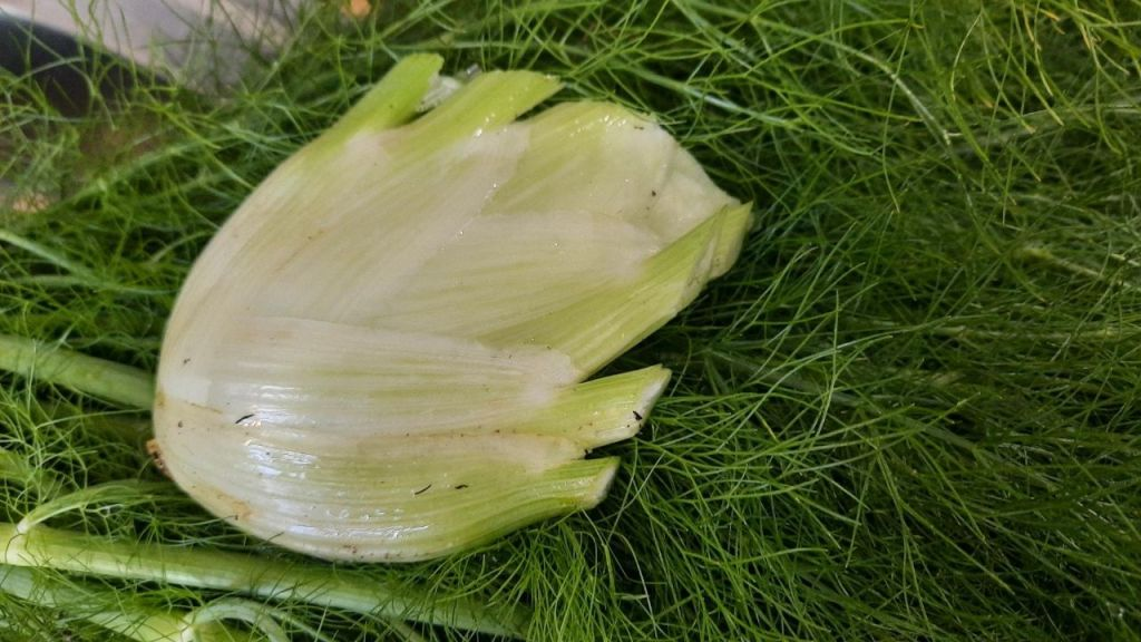fennel bulb on fennel leaves