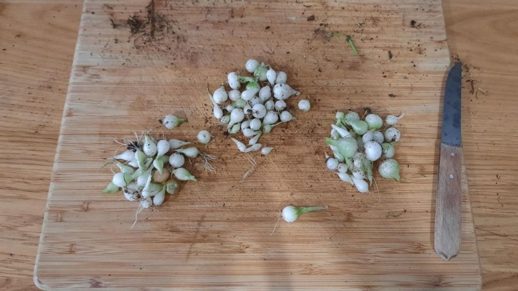 small pearl onions to peel with a knife